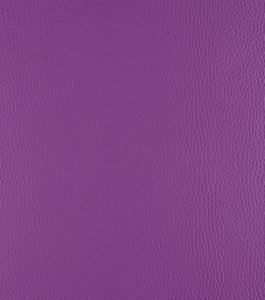 Tulip – Purple